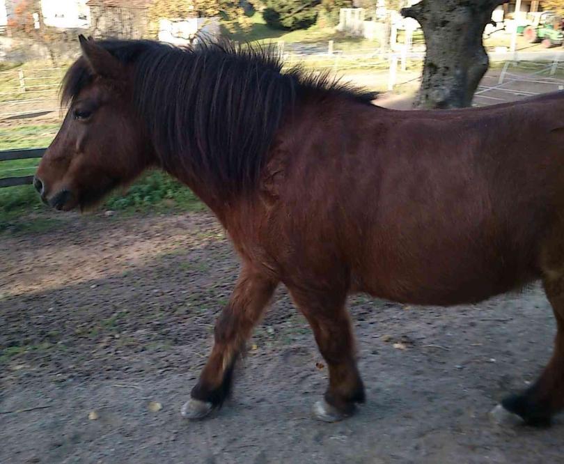 Pferdefütterung zu dick zu dünn